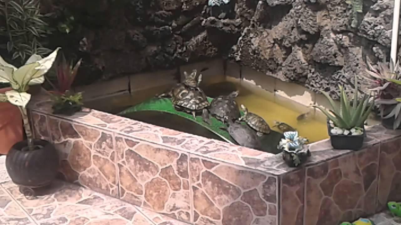 mi patio con su estanque de tortugas  YouTube