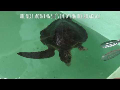 Atoll Marine Centre Turtle Rescue - Victoria