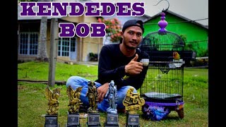 Single Terbaru -  Juara Bob Love Bird Kendedes
