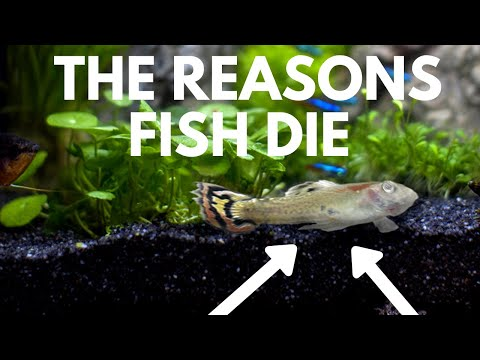 Common Fish Diseases: How To Prevent And Cure Illness In Aquariums