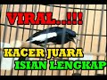 Masteran Kacer Juara Isian Lengkap  Mp3 - Mp4 Download
