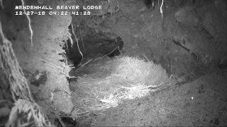 Wild Beaver Lodge - Alaska