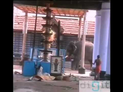 Kerala elephant attack youtube - photo#47
