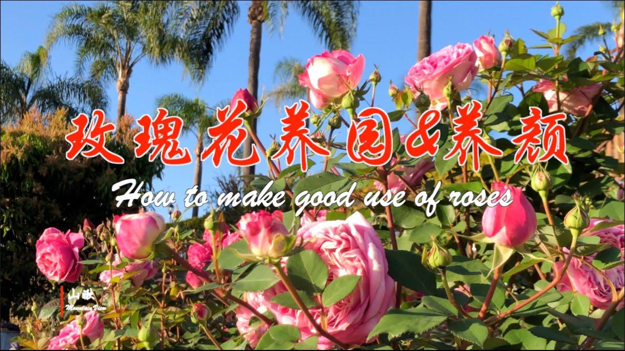 玫瑰花养园&养颜(第52期) How to make good use of roses (Ep52)