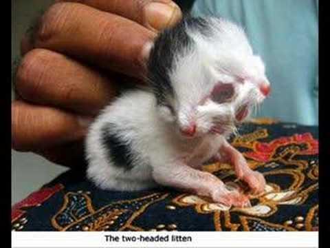 weird animals | Fav animals | Pinterest | Search and Animals  |Weird Cute Animals