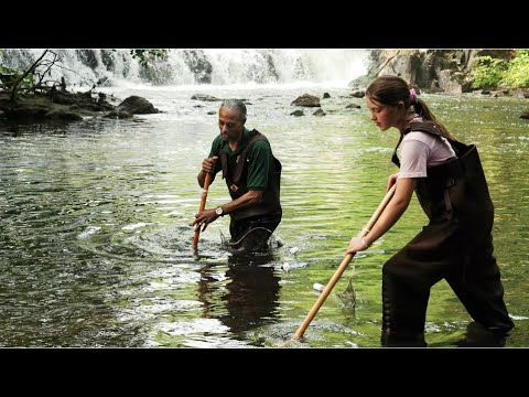 Urban Waters: Restoring The Bronx River | WCS