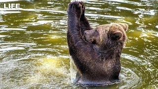 Медведь купается в реке с отдыхающими