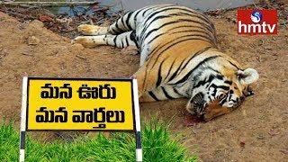 Forest Officer Irresponsibility Kills Tiger   Kalyandurg   Mana Ooru Mana Varthalu   hmtv