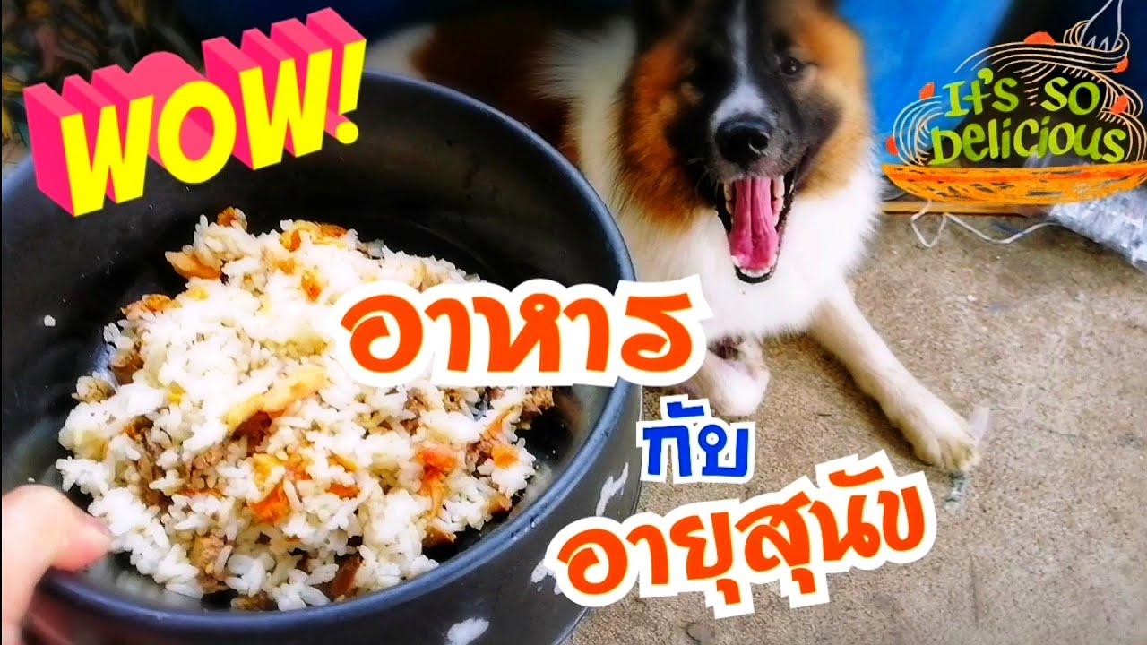 อาหารกับอายุของสุนัขบางแก้ว การกินตามวัยของสุนัข เป็นอย่างนี้!  (บางแก้วการกิน ep.74 )