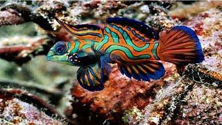 Подводный мир и великолепие Морских глубин Красного моря.  Документальный фильм