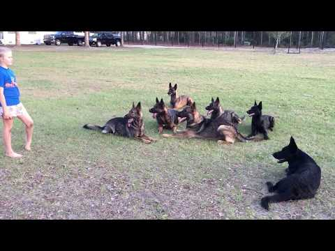 7 protection dogs
