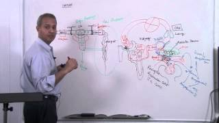 Fundametal of Renal System Lecture 2 Part 2/6