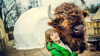 Baixar Linde wordt gewekt door gigantische bizon (Music For Life 2015)