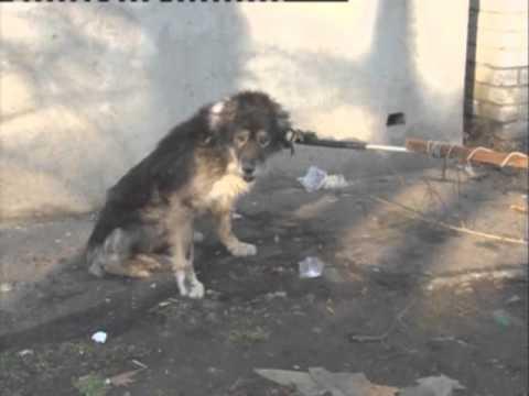 Бешеные собаки фото -
