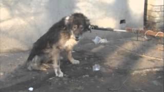 Бешеная Собака в Николаеве. Магнолия-ТВ.