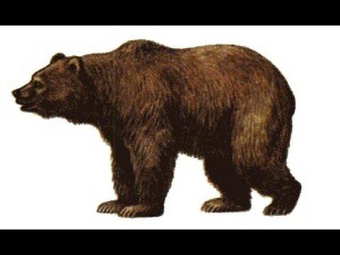 Как нарисовать медведя How to draw bear #draw