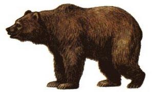 Как нарисовать медведя How to draw bear #draw(Как нарисовать медведя How to draw bear #draw Мы с вами уже много рисовали животных, так что этот урок не должен предс..., 2016-06-19T10:25:01.000Z)