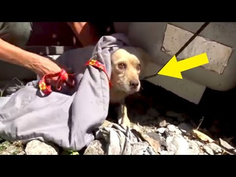 Terrified Dog Abandoned When His Family Moves Away Goes To Heartbreaking Lengths To Survive