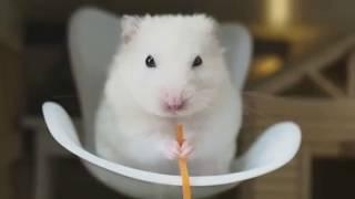 ХОМКИ смешное видео))) Смешная озвучка ХОМЯЧКИ НОВОЕ!