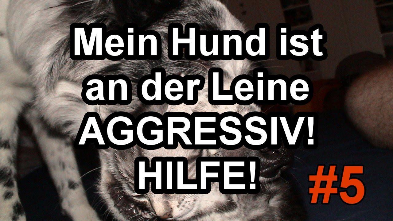 Mein Hund Geht Aggressiv An Der Leine Gegen Andere Hunde Henry J