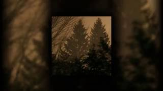 The Sun Is In The North - If These Trees Could Talk