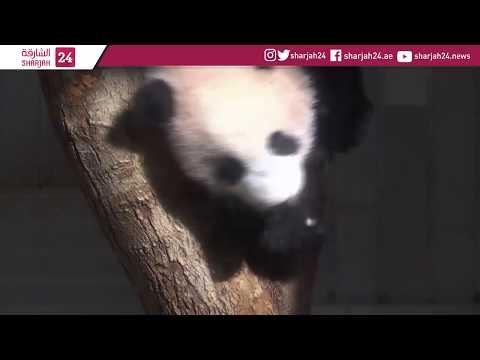 Japan panda cub meets media before public debut