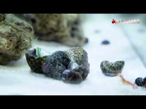 Colombo our Marine Tank Part 2