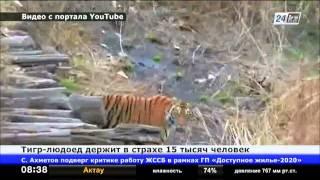 В Индии тигр-людоед держит в страхе 15 тысяч человек