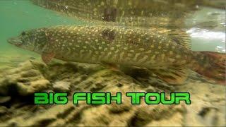 Big fish tour - Lucci a spinning sul lago di Bilancino! Spinnerbait devastante!
