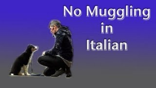 No Mugging With A Puppy- In Italian Dog Training