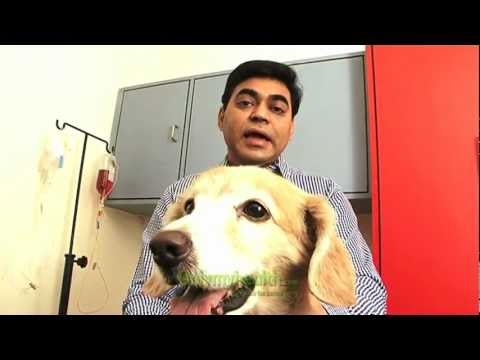 Veterinary Medicine in India - Onlymyhealth.com