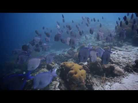 What Would You Say Ocean Geographic Pictures of the Year Short Movie finalist