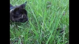 Нереальная охота кошки