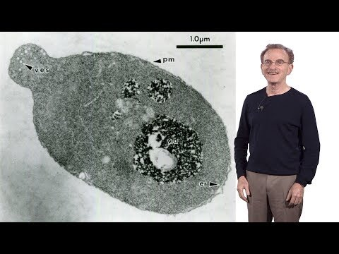 Randy Schekman (HHMI & UCB) 1: Secretory Pathway: How cells package & traffic proteins for export