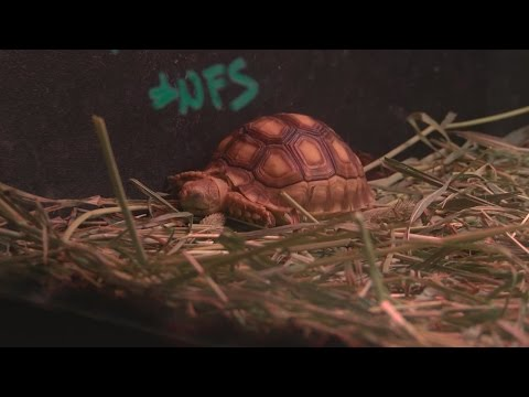 Same Tortoise Stolen And Returned Twice From Albuquerque Pet Shop