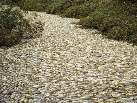 Strange phenomenon a lot of fish swim ashore youtube for Lots of fish