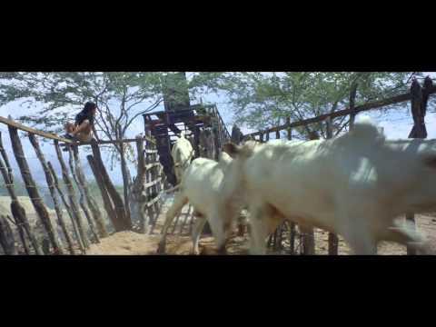 Boi Neón - Trailer en español