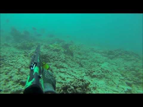 Spearfishing Hawaii : Yellow plague!