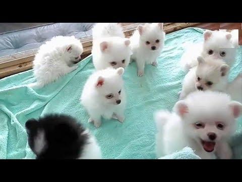 Top 10 Dog CUTE Type