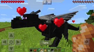 How to Tame and Ride the ENDER DRAGON in Minecraft PE (Pocket Edition) - *SECRET* in MCPE