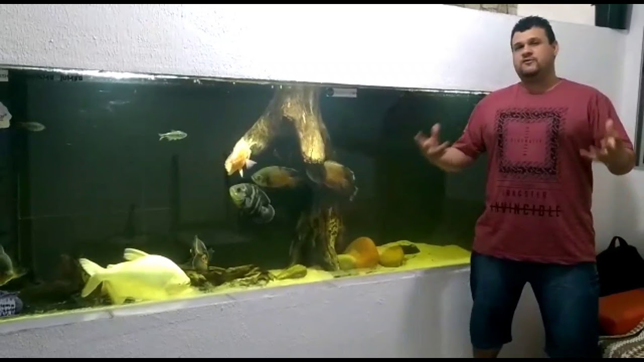 Esdras Rodrigues Aquarismo Entre Amigos/Top Tropical - 11 Anos AQUARISMO JUMBO-Peixe de Estimação