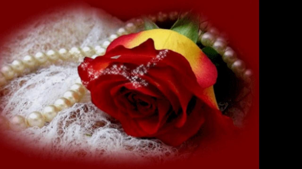 Ao Meu Amor Rosas Vermelhas Youtube