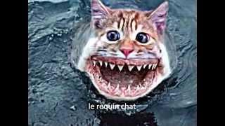 le requin chat