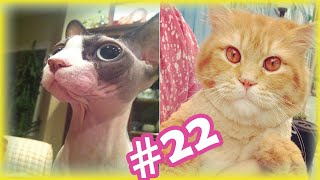 Cute and Funny Cat Videos Compilation | Beautiful Cats and Cute kittens | #22