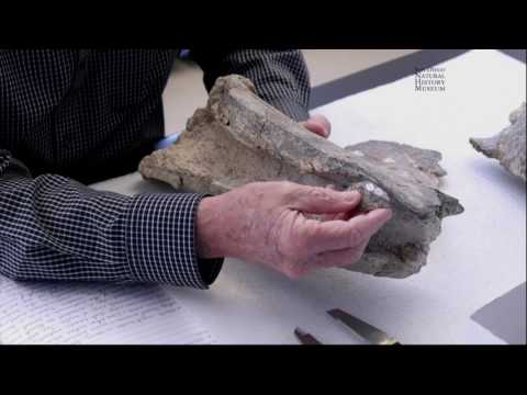NATtalk: An Evening with the Cerutti Mastodon Scientists