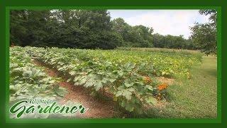 Stoney Creek Farm   Volunteer Gardener