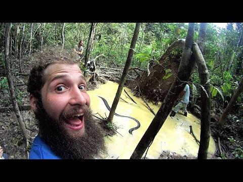 Anaconda In The Amazon Jungle