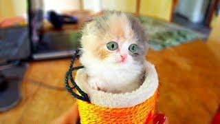 Маленький котенок играет игрушками // Самый милый котенок в мире // Смешной котенок играет в коробке
