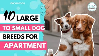 Best Apartment Dogs of 2020 || List of Top 10 Dog Breeds you can have in your Apartment || Monkoodog