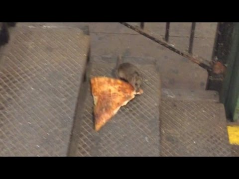 Comedian Describes Moment He Saw Rat Carrying Pizza